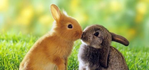 Бизнес-идея: Разведение кроликов в домашних условиях.