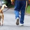В кафе заходит человек с собакой и заключает с посетителями пари, что его пёс сейчас будет разговаривать. Но собака молчит. Человек оплачивает пари и уходит под общий хохот.