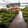 Бизнес-план: Питомник растений