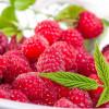 Малина очень полезная и вкусная ягода. Тяжело встретить человека, который не любит вкус этой ягоды. Малина пользуется спросом, поэтому цены на неё всегда высоки.