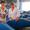 Выращивание осетра – бизнес на деликатесах